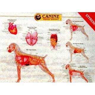 Canine Internal Organ Anatomy Chart
