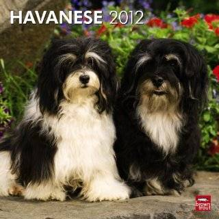 2012 Havanese Dog Calendar   All Proceeds to be Donated to