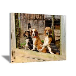 Waiting to Run Hunting Beagle Canvas Art