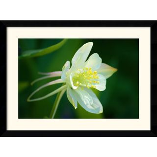 Andy Magee White Columbine Framed Art Print