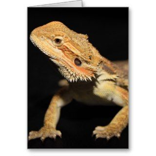 Curious Bearded Dragon 3 Greeting Cards