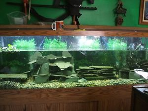 125 Gallon Glass Aquarium Fish Tank Stand Fluval FX5 Filter Crayfish