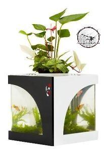 Acrylic Nano Aquarium Eco Aquaponics Aquarium