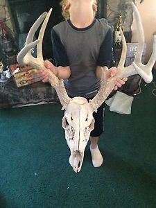 Whitetail Deer Skull 8 Point Antlers Sheds Halloween Decor Taxidermy Rattle Call