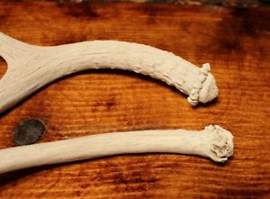 2 Small Mule Deer Shed Antler Dog Chews Horns Sheds Treats Craft Cabin Elk