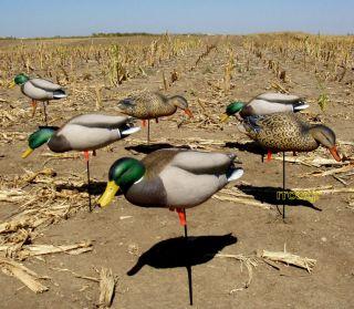 Avery Greenhead Gear GHG Pro Grade Full Body Feeder Mallard Duck Decoys 6 New