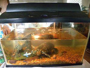 Live Pet Turtle Adoption Includes Tank Water Filter and Food