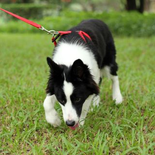 Red Easy Walk Pet Dog Harness Leader with Pull Free Leashes Size M