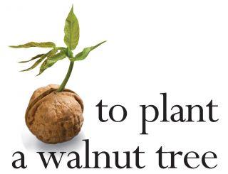 Giant Big Huge Nut Walnut Tree Fresh Seed from 2013 RARE Seeds Last 99 Seeds
