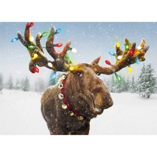 Funny Moose Xmas Light Antlers Single Christmas Card by Avanti Merry Christmoose