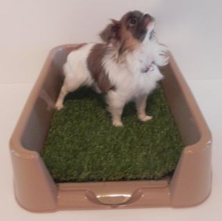 "New Rascal Dog Litter Box ""Little Squirt"" TM 23 by 16 by 6 for Toy Breeds"