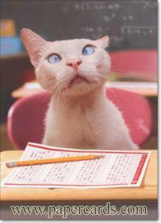Cat with Standardized Test Funny Graduation Card Greeting Card by Avanti Press