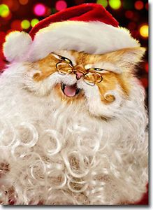 Santa Cat Cute Boxed Christmas Cards 10 Greeting Cards by Avanti Press