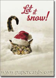 Cat in Snow Funny Boxed Christmas Cards 10 Greeting Cards by Avanti Press