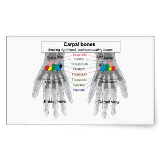 Human Carpus Bone Structure Diagram Rectangle Sticker