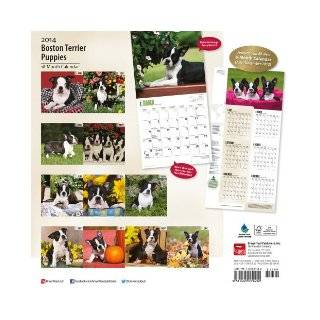 Boston Terrier Puppies 18 Month Calendar (Multilingual Edition) Browntrout Publishers 9781465009432 Books