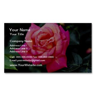 Hybrid Tea Rose 'Fragrant Cloud' White flowers Business Card